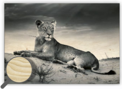 Wooden Picture Lioness - Every piece is an original – there is a picture printed on a wooden material with natural structure.