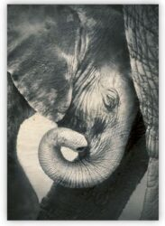 Wooden Picture Little Elephant  (O014)