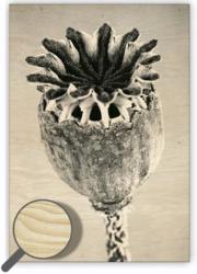 Wooden Picture Poppyhead
