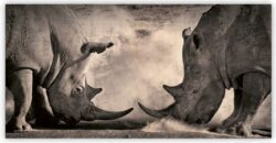 Wooden Picture Rhinos  (O040)